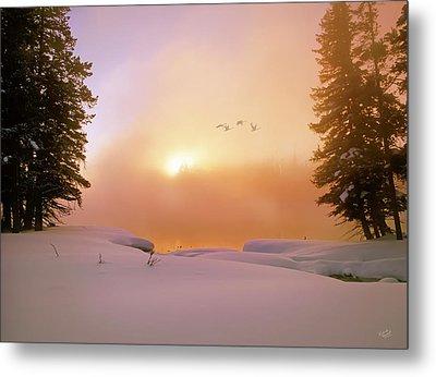 Winter Swans Metal Print by Leland D Howard