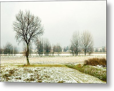 Winter Trees Metal Print by Silvia Ganora