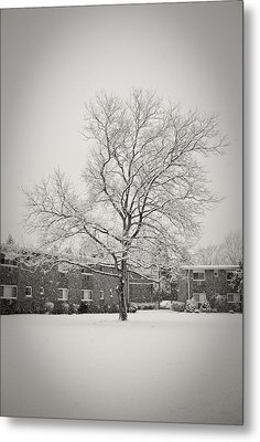 Winter Wonderland Metal Print by Mandy Wiltse