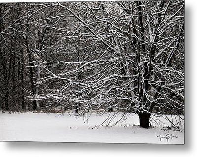 Winter Wonderland Metal Print by Nancy  Coelho