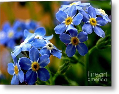 Wood Forget Me Not Blue Bunch Metal Print by Ryan Kelly
