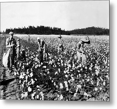 Workers Picking Cotton, Georgia, 1936 Metal Print by Everett