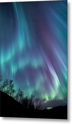 Worth The Wait Metal Print by Tor-Ivar Naess