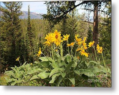 Yellowstone National Park Wildflower Yellow Arrowleaf Balsamroot Metal Print by Adam Long