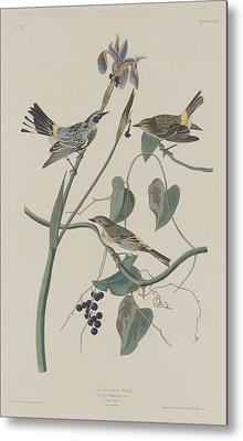 Yellow-crown Warbler Metal Print by John James Audubon