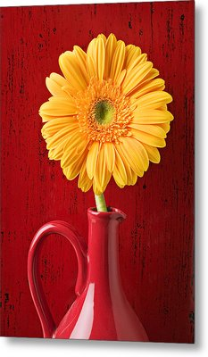 Yellow Daisy In Red Vase Metal Print by Garry Gay