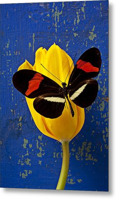 Yellow Tulip With Orange And Black Butterfly Metal Print by Garry Gay