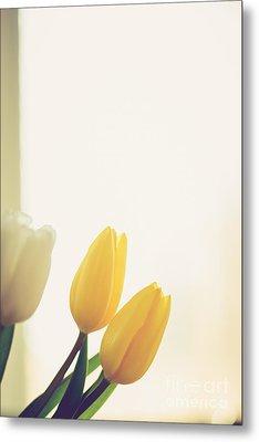 Yellow Tulips Metal Print by Cheryl Baxter