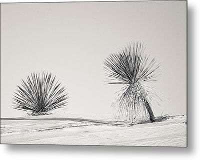 yucca in White sands Metal Print by Ralf Kaiser