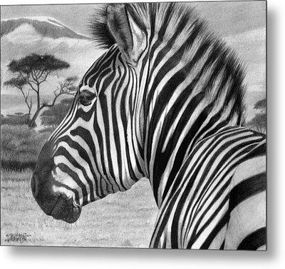 Zebra Metal Print by Tim Dangaran