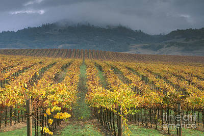 Clouds Over Alexander Valley Vineyard On A Fall Morning Poster by Gary Crabbe