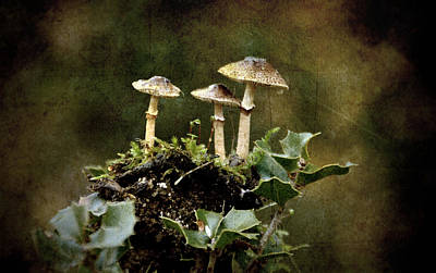 Little Mushrooms Poster by RicardMN Photography