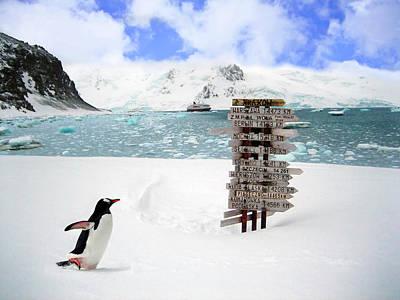 A Gentoo Penguin (pygoscelis Papua Poster by Miva Stock
