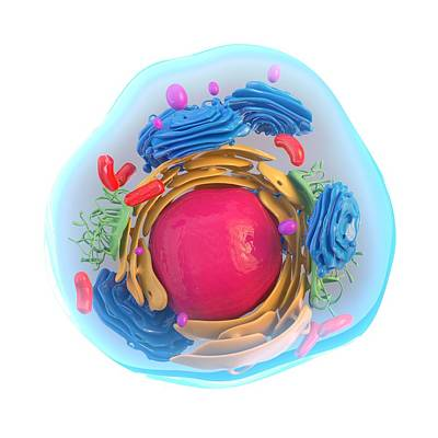 Animal Cell, Artwork Poster by Science Photo Library