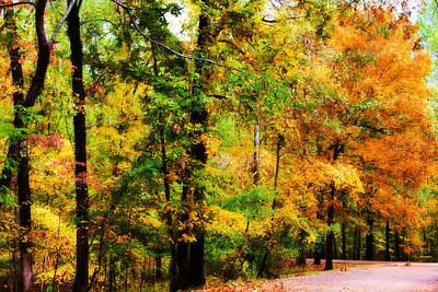 Woodland - Landscape - Autumn Splendor Poster by Barry Jones