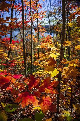Autumn Splendor Poster by Elena Elisseeva