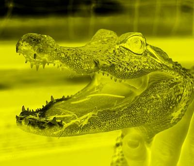 Baby Gator Neg Yellow Poster by Rob Hans