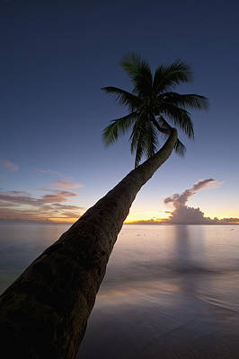 Barbados, Palm Tree Leaning Over Beach Poster by Ian Cumming