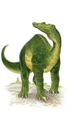 Baryonyx Dinosaur Poster by Deagostini/uig
