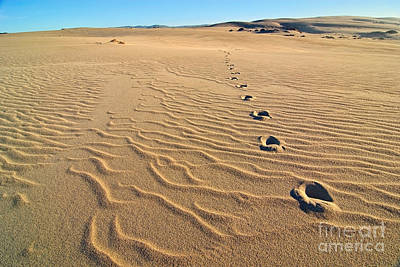 Beautiful Sand Dunes Of The Rancho Guadalupe Dunes Preserve In California Poster by Jamie Pham