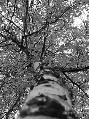 Birch Tree Poster by Jennifer Kimberly