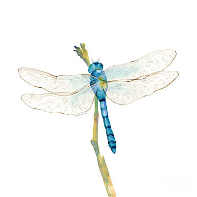 Blue Dragonfly Poster by Amy Kirkpatrick