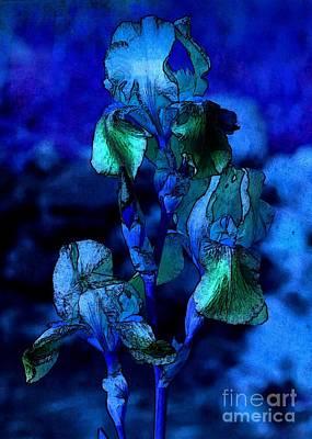 Blue Irises Poster by Carol Groenen