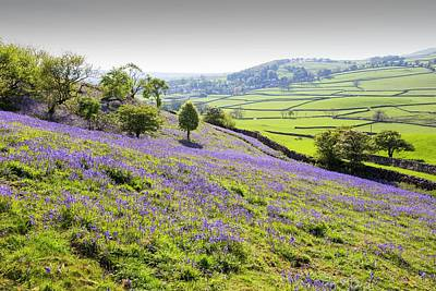 Bluebells Growing On A Limestone Hill Poster by Ashley Cooper