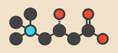 Carnitine Food Supplement Molecule Poster by Molekuul