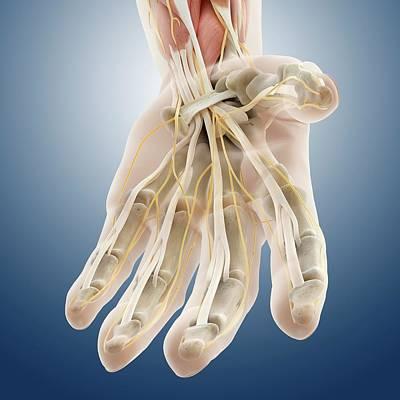 Carpal Tunnel Wrist Anatomy Poster by Springer Medizin
