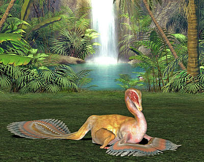Caudipteryx Dinosaur Poster by Friedrich Saurer