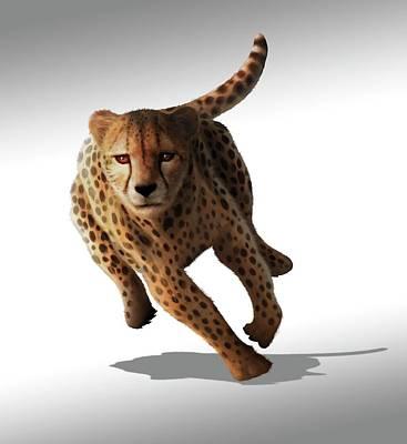 Cheetah Poster by Mark Garlick