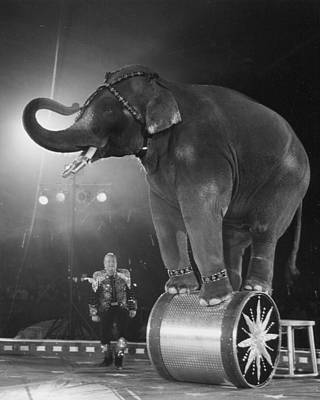 Circus Elephant  Poster by Retro Images Archive