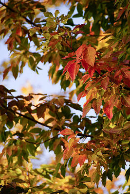 Colorful Leaves Poster by Gloria Pasko