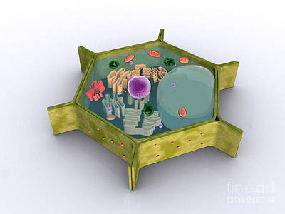 Conceptual Image Of A Plant Cell Poster by Stocktrek Images