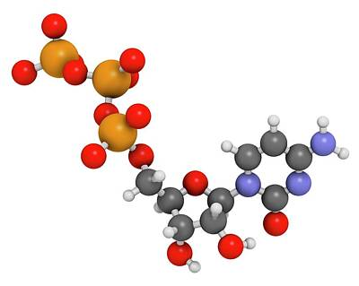 Cytidine Triphosphate Molecule Poster by Molekuul