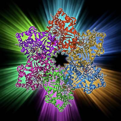 Dna Helicase Molecule Poster by Laguna Design
