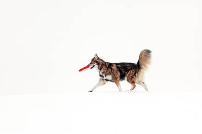 Dog In The Snow Poster by Grant Glendinning