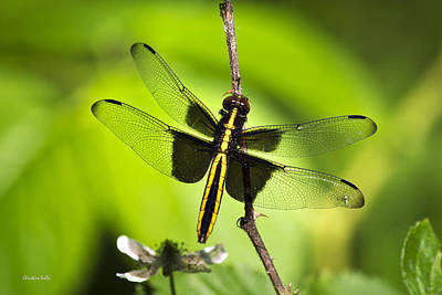 Dragonfly I Poster by Christina Rollo