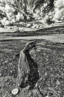 Driftwood Mono Poster by Steve Purnell