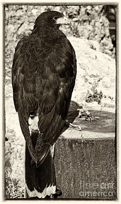Eagle Poster by Jose Elias - Sofia Pereira