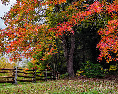 Fall Maple Poster by Anthony Heflin