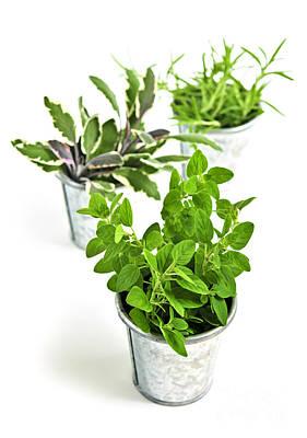 Fresh Herbs In Pots Poster by Elena Elisseeva