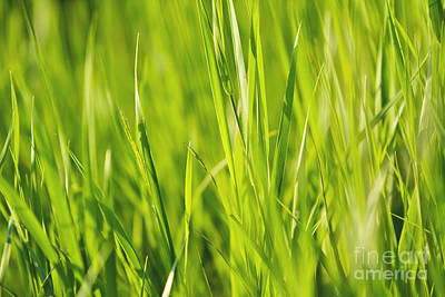 Grass Poster by Dan Radi