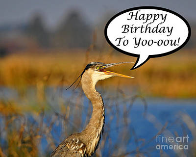 Happy Heron Birthday Card Poster by Al Powell Photography USA