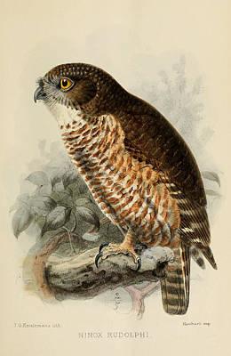 Hawk Owl Poster by J G Keulemans
