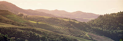 High Angle View Of A Vineyard Poster by Panoramic Images