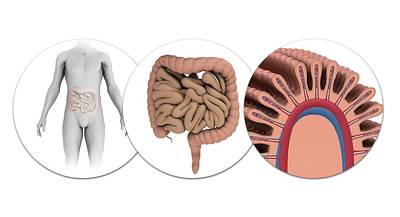 Human Intestines Poster by Mikkel Juul Jensen