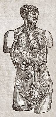 Human Male Torso, 16th Century Poster by Middle Temple Library