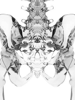 Human Pelvis Bones Poster by Sciepro